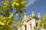 Lemon trees, Seville.